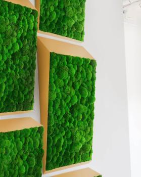 Plantes & murs végétaux